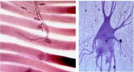 neuromusculares.jpg